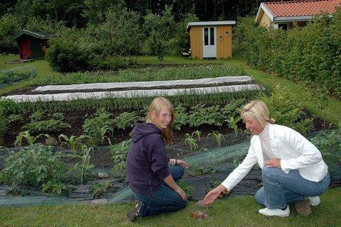 De ferskeste jordbærene blir plukket av Silje Hansen Røed (t.v) og Astrid Hansen. De har eid jord og hus i kolonihagen i 15 år. Foto: Ellen Marie Andersen