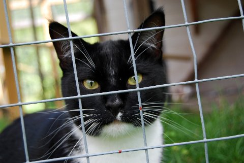 Katten Martin ble dumpet i fjor sommer, men fikk et nytt fosterhjem hos Dyrebeskyttelsen.