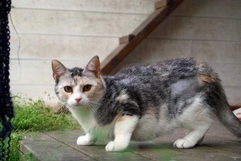 Ifølge dyreklinikken i Tønsberg gjør du lurt i å skaffe katten din både chip og halsbånd.