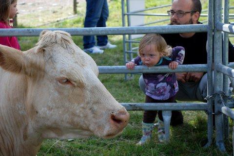 - HEI, DU! Denne lille jenta prøver å få kontakt, men kua må ta seg en pust i bakken, etter å ha hatt besøk av hundrevis av barn under Lier bondelags Åpen gård-arrangement på søndag. (Foto: Stein Styve)