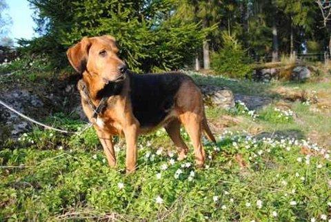 Hunden som har fått navnet Mia ble funnet på Lambertseter i mars i år.