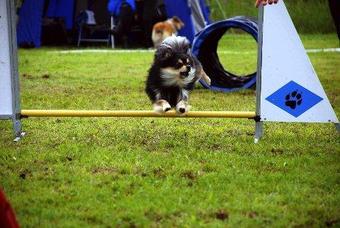 Ny superhund? Tequila er den andre hunden til Jeanette Sandbæk Haaland. Målet er VM i 2015.
