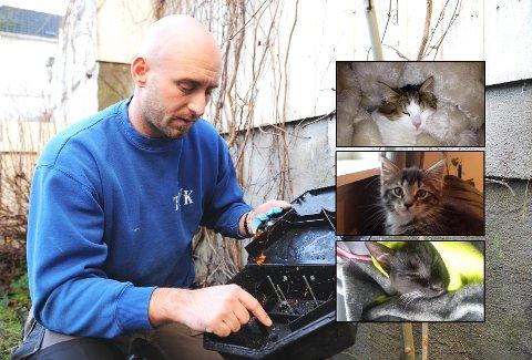 Kenneth Ervik i Tønsberg Skadedyrkontroll mener kattene i Re er blitt forgiftet med vilje.