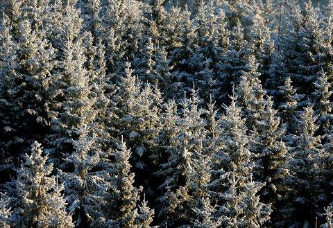 Til salgs: Statskog blir pålagt av den nye regjeringa å kvitte seg med rundt 1,1 millioner dekar skog.