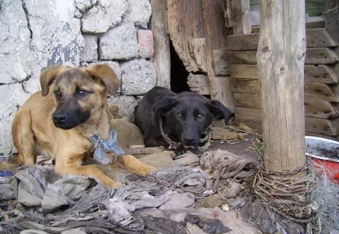 Dette er to av de mange hundene som har fått et nytt liv takket være foreningen studentene har engasjert seg i.