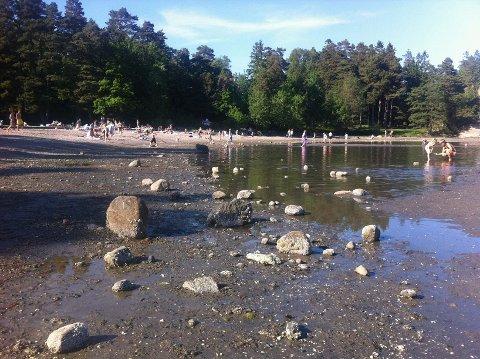 """Slik ser det ut på bunnen innerst på grunna på Skjellvika. Bildet er tatt en varm dag da naturen hadde """"dratt ut proppen"""", ved ekstrem fjære i sommer."""