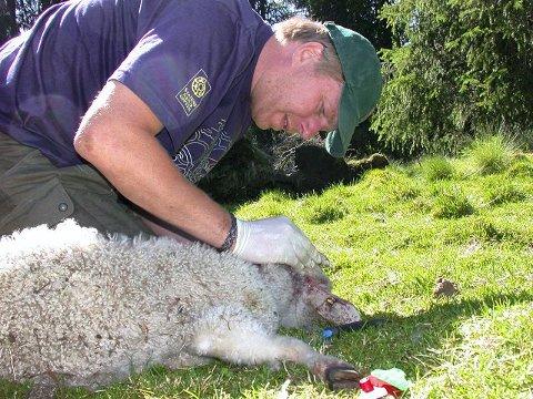 Fellingsleder i Statens naturoppsyn (SNO), Erik Ola Helstad er spent hva DNA-analysen av hannbjørnen vil vise.