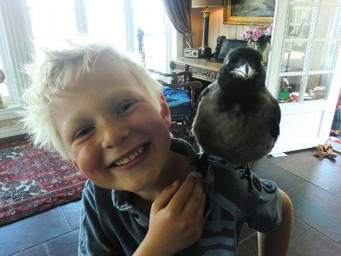 Kråka Janne flyttet inn hos familien Sørsveen en liten periode. Der ble den fort familiens yndlingskjeledegge. Her står hun på skulderen til Ferdinand (6).