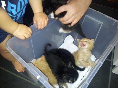 Bare flaks gjorde at kattungene overlevde. Nå trenger de et nytt hjem. Kanskje du har plass til en av dem?