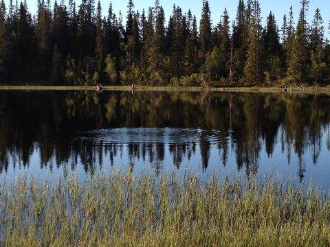 I Lille Byringstjernet i Rendalen er det mer enn nok fisk å få.
