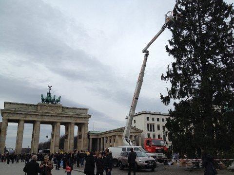 PÅ PLASS:  Grantreet som er gitt av Frogn kommune til Berlin ble satt på plass på Branderburger Tor søndag.  FOTO: OLA TØMMERÅS