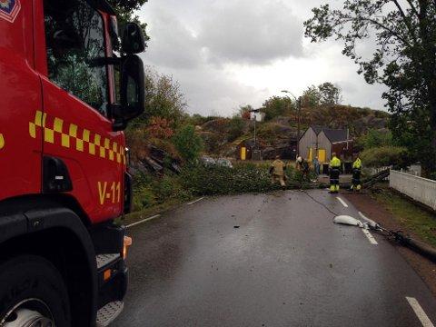 VELTET: Brannvesenet rykket ut for å fjerne treet som veltet på Tjøme lørdag kveld. (Foto: Anine Heitun)