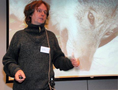 – Det er historisk at svenske myndigheter flytter ulv for å manipulere fram bedre gener, sier rovdyrforsker Petter Wabakken.