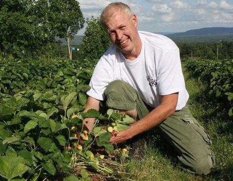 I GANG: I går startet jordbærplukkingen på Hole Gård i Åsbygda. 84 personer er ansatt for å plukke rundt 100 tonn jordbær i løpet av sommeren. Fra søndag blir det salg på gårdenAlle foto: Pernille Storholm Skaret