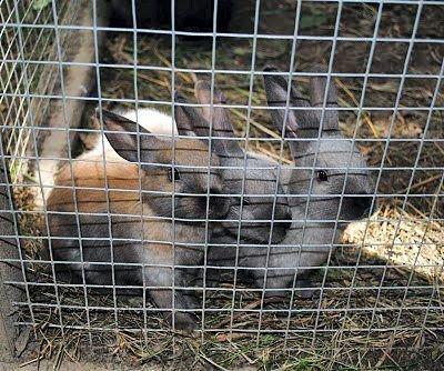 Disse tre søte kaninungene er populære blant både store og små besøkende på Follo museum. FOTO: KAY OLAV WINTHER D.E.