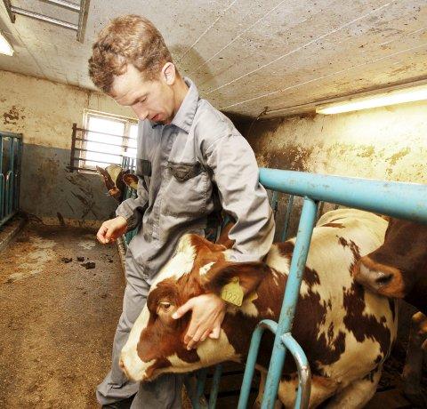 Gamle kjente: Anders begynte på gården samme dag som oksekalven ble født. Derfor fikk oksen navnet Anders.