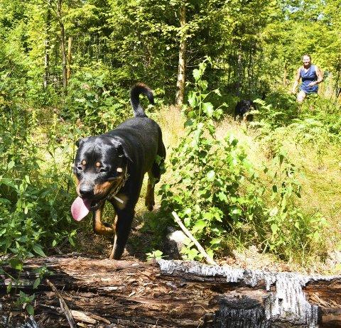 Uten Bånd: Hunden Zoro blir luftet og kan løpe fritt i et 11 mål inngjerdet lufteområde på gården.