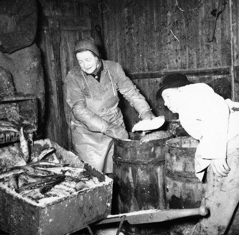Tøff jobb: Dette udaterte bildet illustrerer hvordan arbeidsforholdene var for dem som jobbet på sildesalteriene.