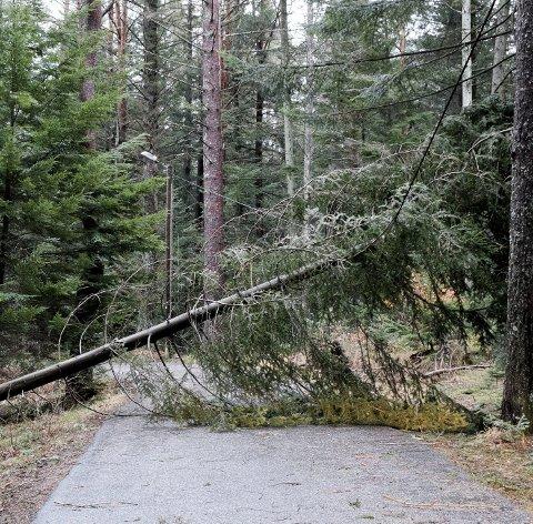 Sperret: Innkjøringen til Haraldsvang var mandag sperret av dette treet.