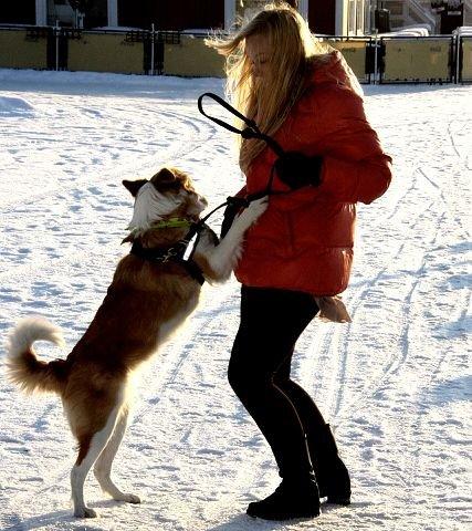 GemytteligIkke alle hunder kan bli terapihunder. Kira har det spesielle gemyttet.