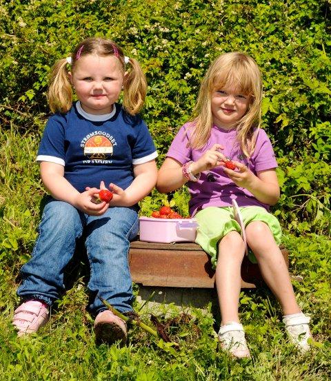 Barna fikk spise så mye jordbær de bare orket under Jordbæreventyret i Sylling.