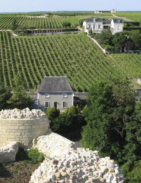 Vingård i Loire.