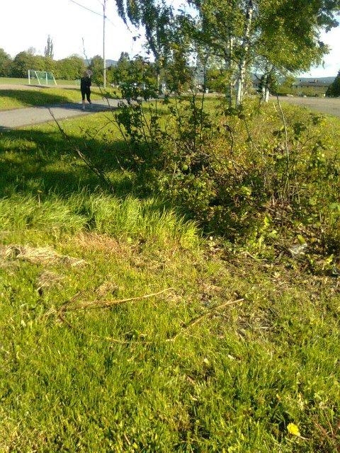 Her er restene etter trefellingen på Ekeberg. FOTO: Privat