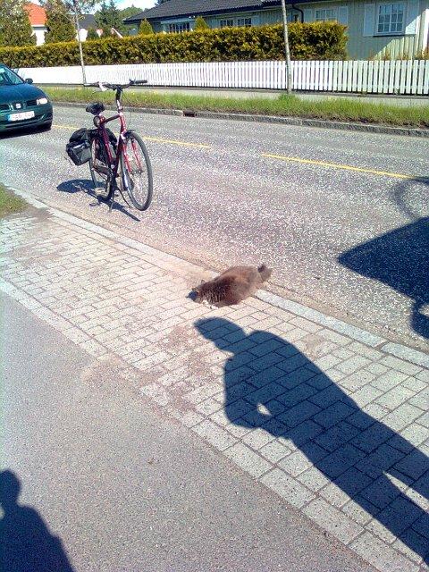 Katten ble avlivet av politiet på grunn av skadene den hadde fått.
