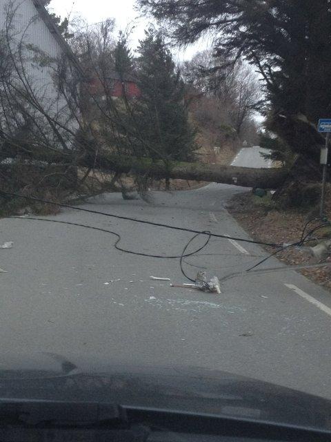 Stort tre har veltet over veien. På veien har den dratt med seg strøm- og telefonledninger.