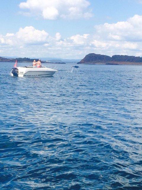 Det var flere som stoppet opp for å se på delfinshowet.