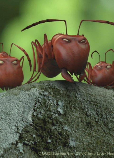 KULE KRYP: De røde maurene er «The Bad Guys»