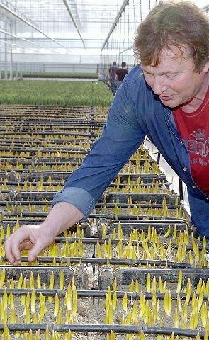 Matthé Schouten «i samtale» med årets gule avling.